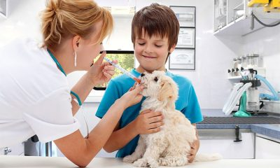 best vet for your pet