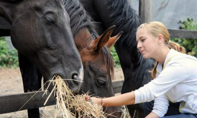 feed your pet horse