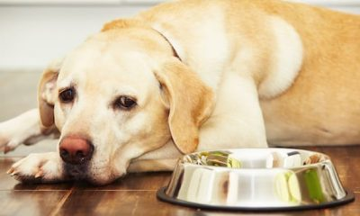 Foods You Shouldn't Give to Your Dog