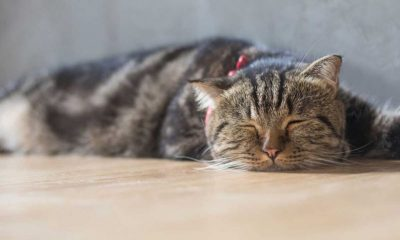 handle simple behavioral issues of cats
