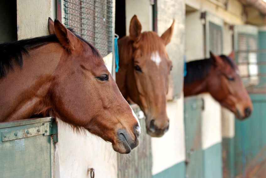 How To Maintain A Horse Stall
