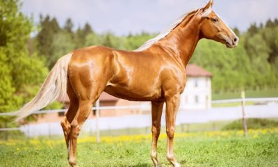 keep your pet horse healthy
