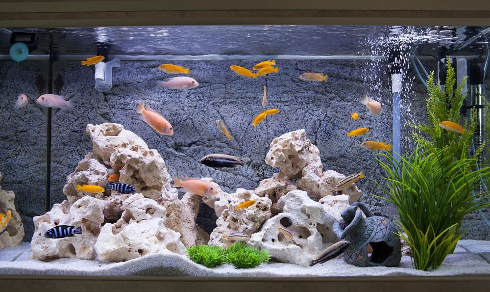 take care for your fish