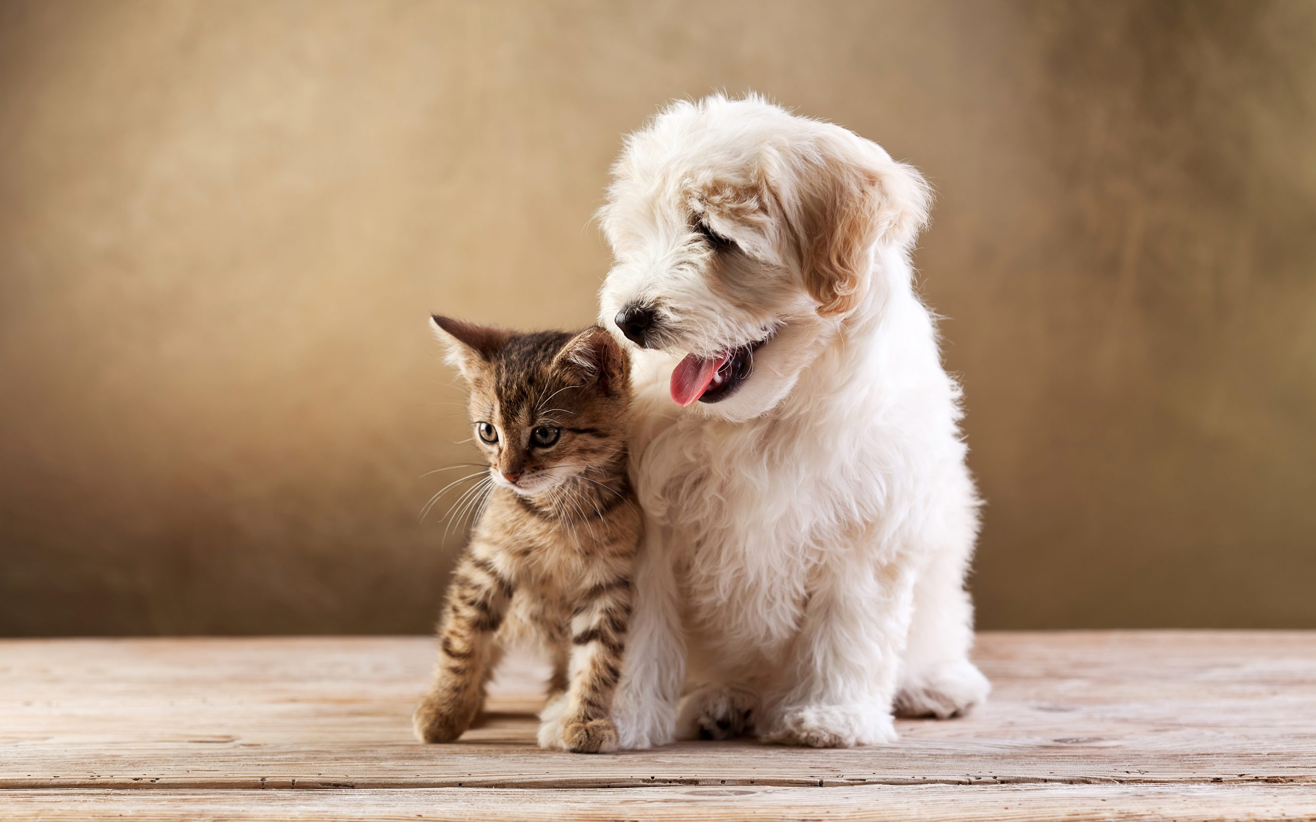 cat and dog live together